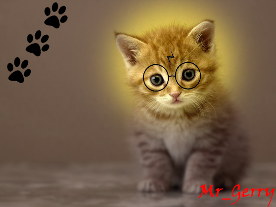 Harry cat by MrGerry27