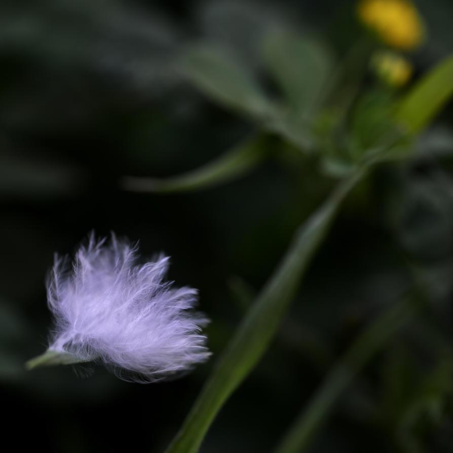 une plume au vent by epsilon3-artphoto