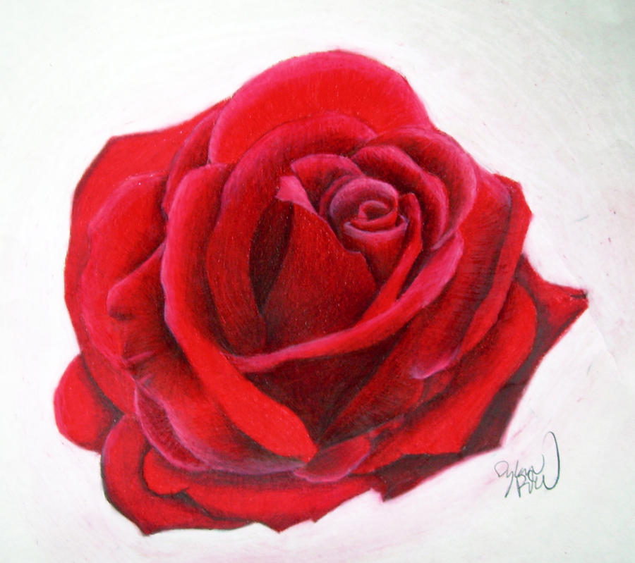 It is a picture of Handy Rose Drawing Color