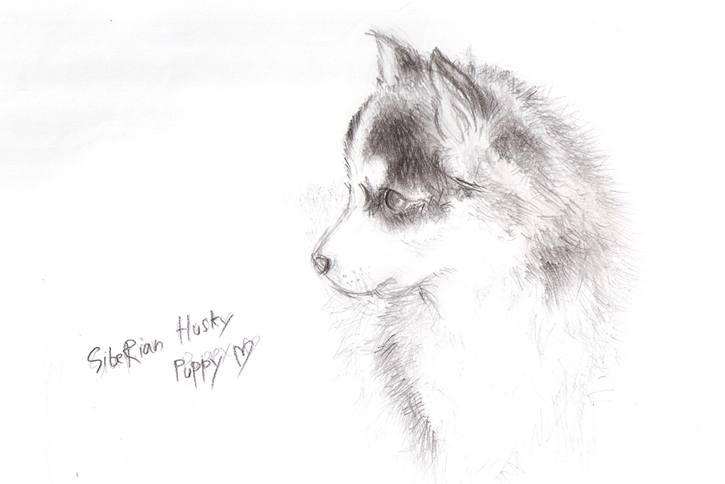 how to draw a realistic puppy easy and slow