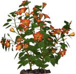 Hibiscus 04 PNG