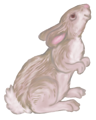 Bunny 04 PNG
