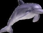 Dolphin 05