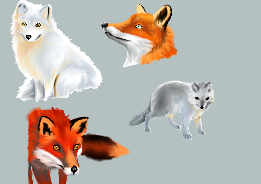 Fur studies 01 by Goonlalagoon