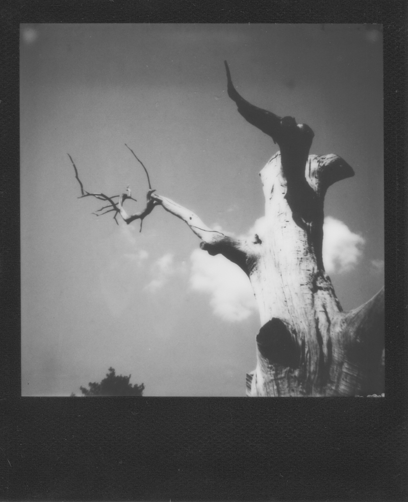 Spooky tree by 1eyed1