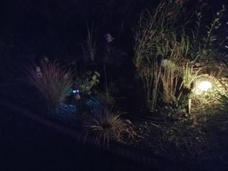 Creepy Pond
