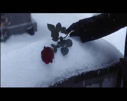 Black Rose by zenon113