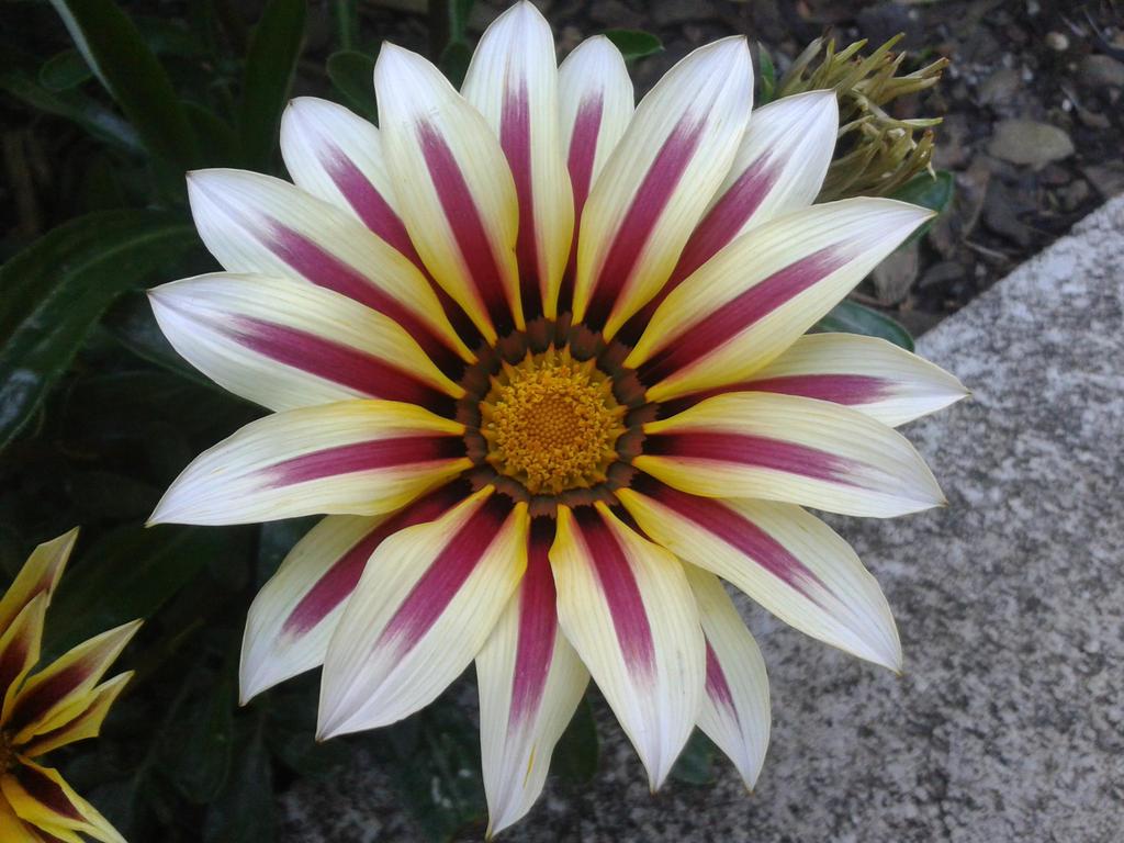 Flowers23 by MasterTeska