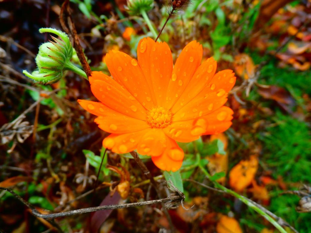 Tears Of A Flower by MasterTeska