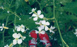 The girl who has red shoes