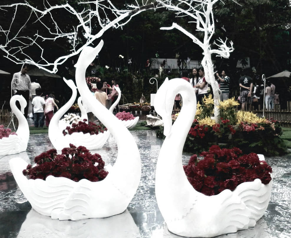 Swans by HangLee