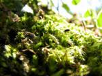 Micro Jungle No1 by UkoDragon