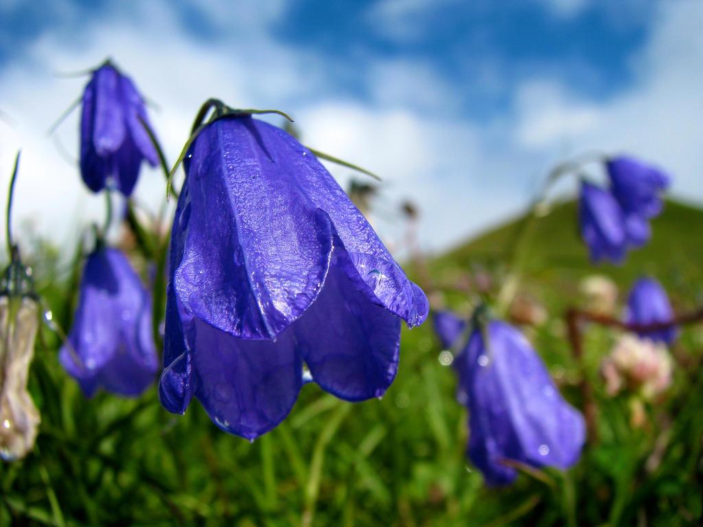 Alpine Flowers by UkoDragon