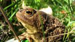 Prince Frogger Closeup by UkoDragon