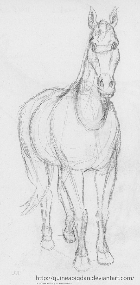 Front view of a horse by guineapigdan on deviantart front view of a horse by guineapigdan sciox Choice Image