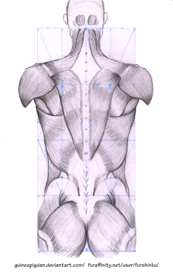 deviantart how to draw muscles