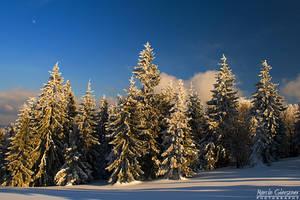 Winter Remembrance by yonashek