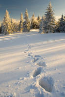 Winter footsteps... by yonashek
