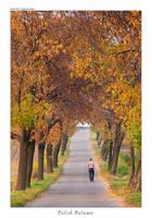 Polish Autumn by yonashek