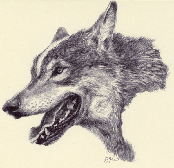 Wolf as Wolf by Ryer-Ord-Star