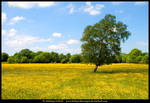 Yellow Ireland