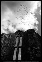 The Birds, Ireland by fluffyvolkswagen