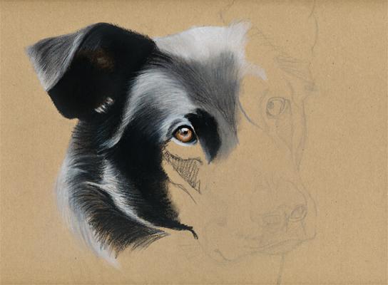 Dog pastel portrait - WIP by Jeanne-Lui