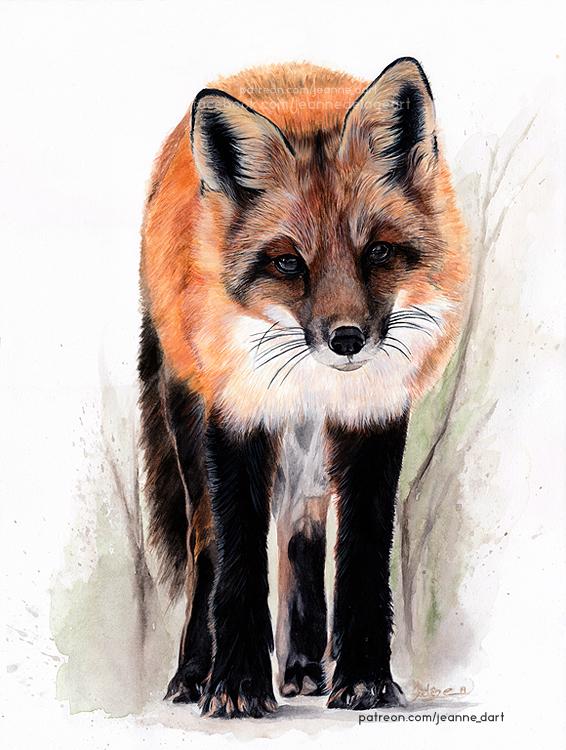 Red Fox | Realistic Waercolor