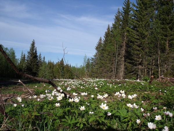 http://fc03.deviantart.net/fs71/f/2013/225/e/2/wildflowers_by_alenawww-d6i1huy.jpg