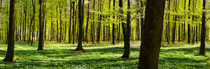 Forest strip