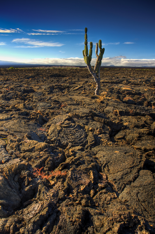 Cactus by abey79