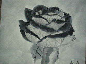 Black Rose...