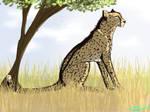 Practice Cheetah