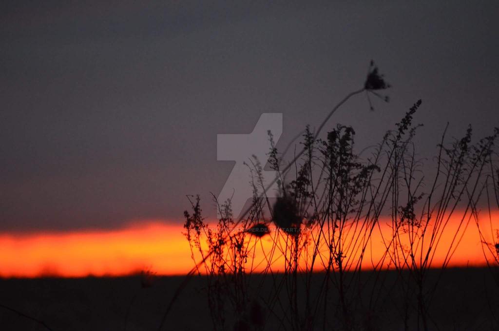 Sunset by Krissy-Loves-Skipper