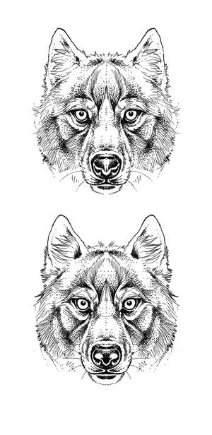 Wolf faces