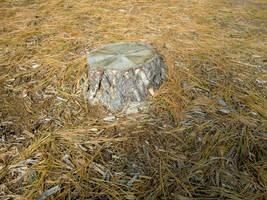 Stump Alone by phoenixreal