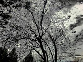 Autumn Trees by phoenixreal