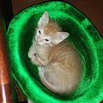 Kitten in a hat