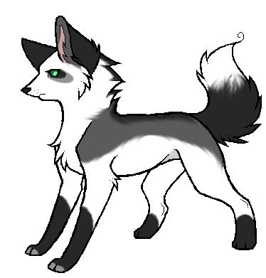 Platinum Silver Fox