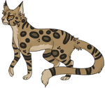 Leopardstar 5/100