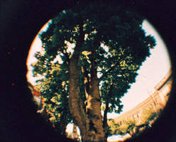 Tree, Pike St. (Fisheye) by afraudandafake