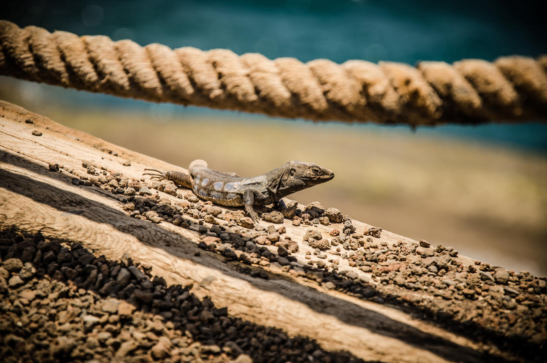Lizard by DimitriSergejev