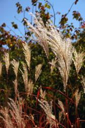 Autumn Grass by aniaj