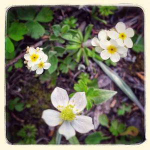 Wild Flowers V