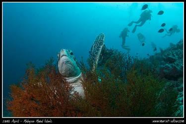 Divers on the run by carettacaretta