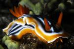 sea slug 1