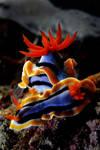 sea slug 3 by carettacaretta
