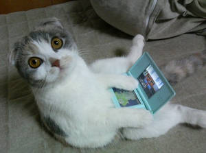 Cat playing nintendo DS