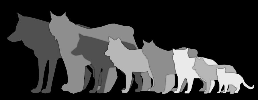Comparison Chart Wolf Fox Lynx Cat By Couchkissen On Deviantart