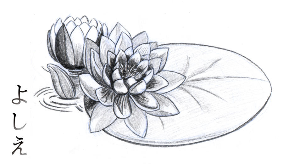 water lily nymphaeaceae by kou kagerou on deviantart